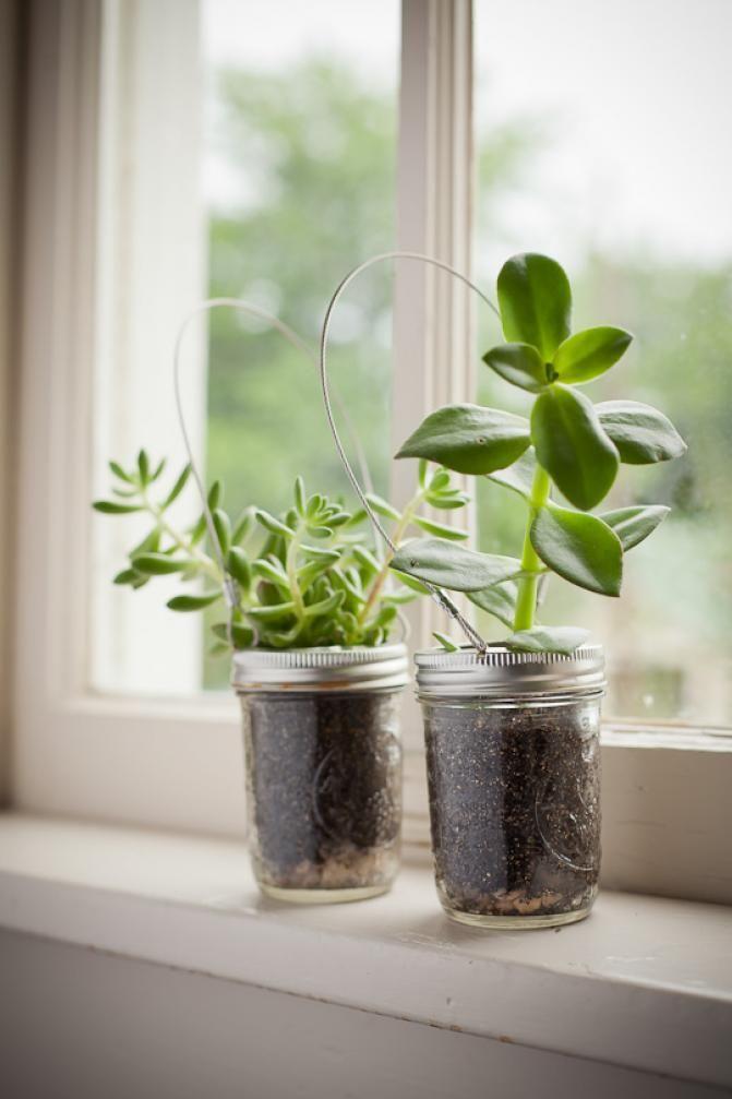 plantes en bocaux