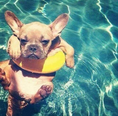 cute summer puppy