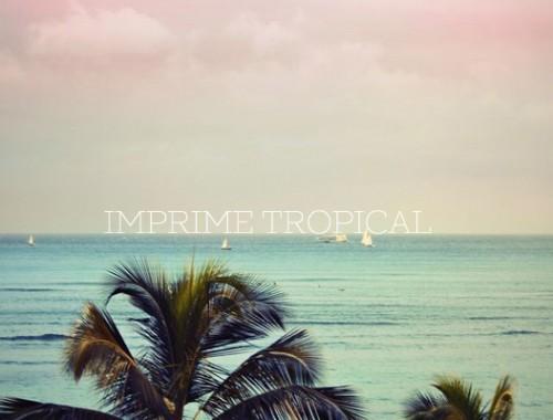 imprimé tropical mode