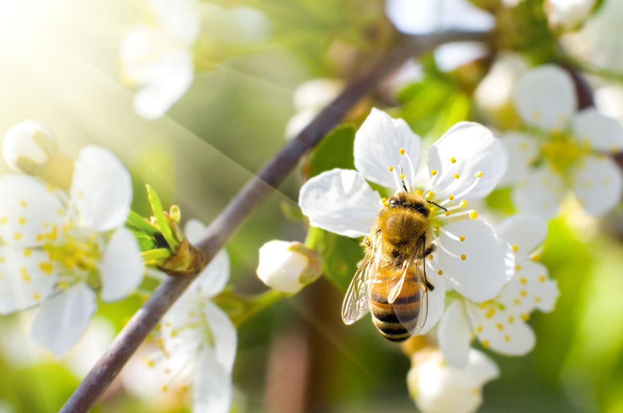 Earth Day // Bee Pink, l'engagement de PINK LADY® pour la planète !