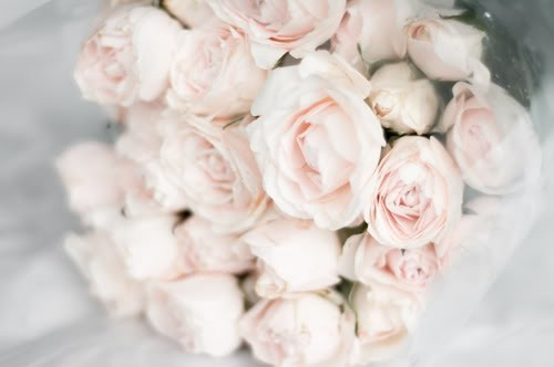 Roses Rose Pale Le So Girly Blog