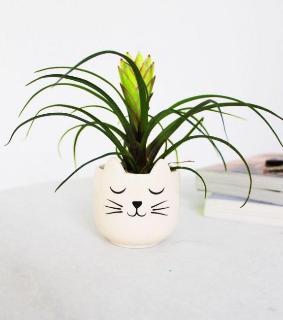 pot de fleurs chat