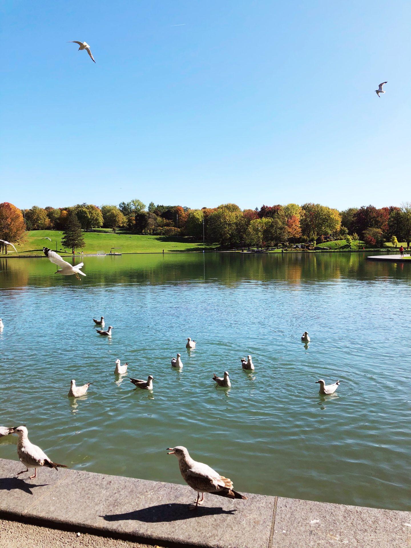lac aux castors montreal